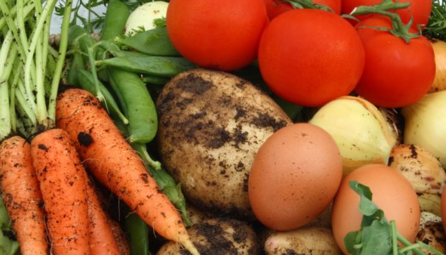 The Health Benefits of Growing Your Own Food