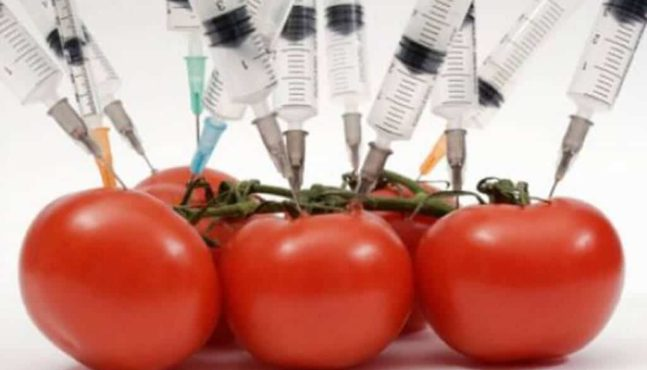 Just What Are GMO Foods Anyway?